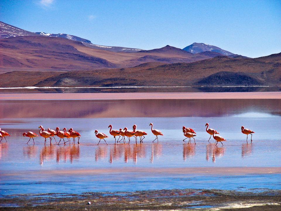 Flamingo's in meertje in omgeving Uyuni