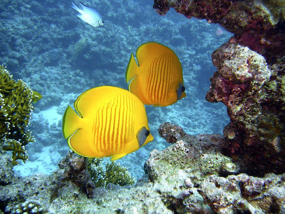 Hurghada underwater
