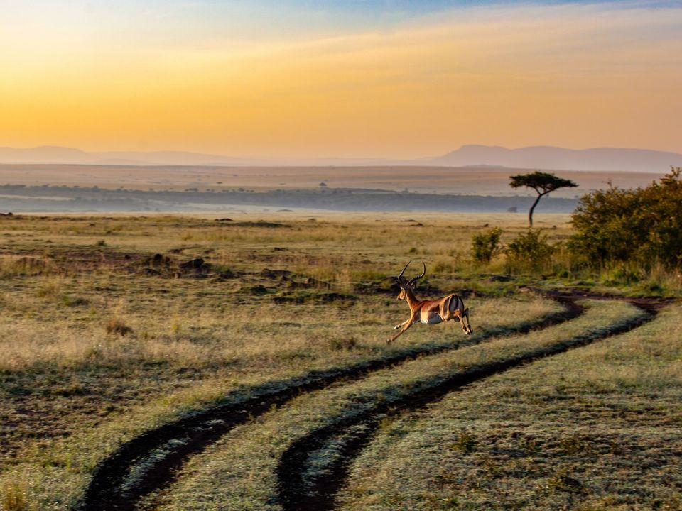 Wild Kenia