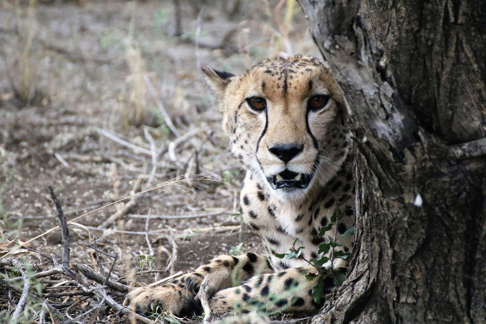 Cheeta Madikwe