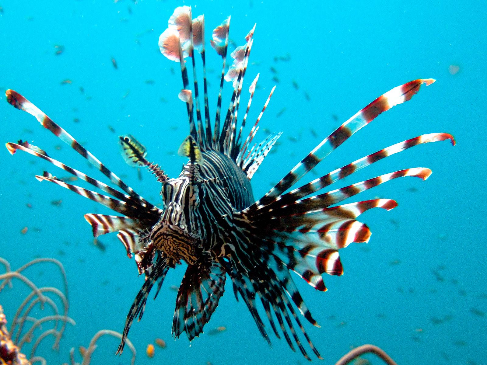 Koh Lanta   Koh Phi Phi duiken