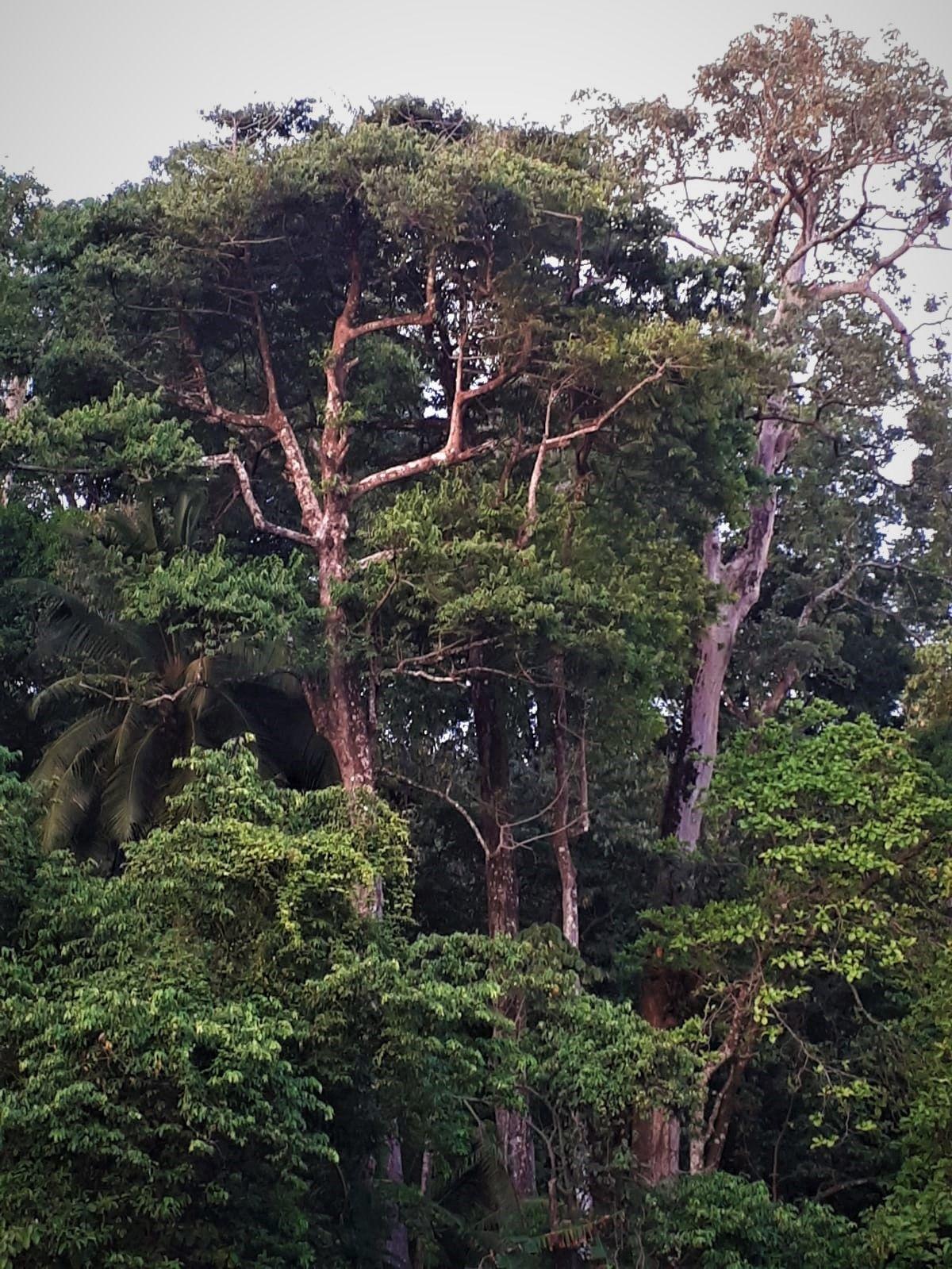jungle La Leona Lodge
