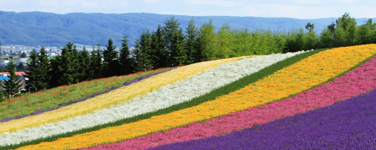 Header Lavendel Furano