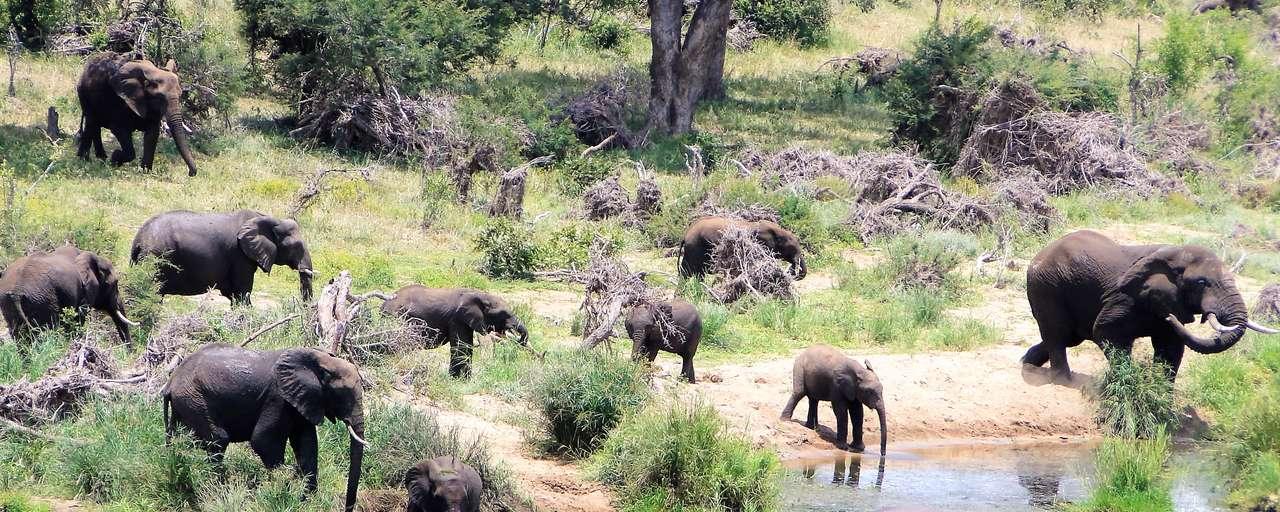 Header Olifanten Kruger