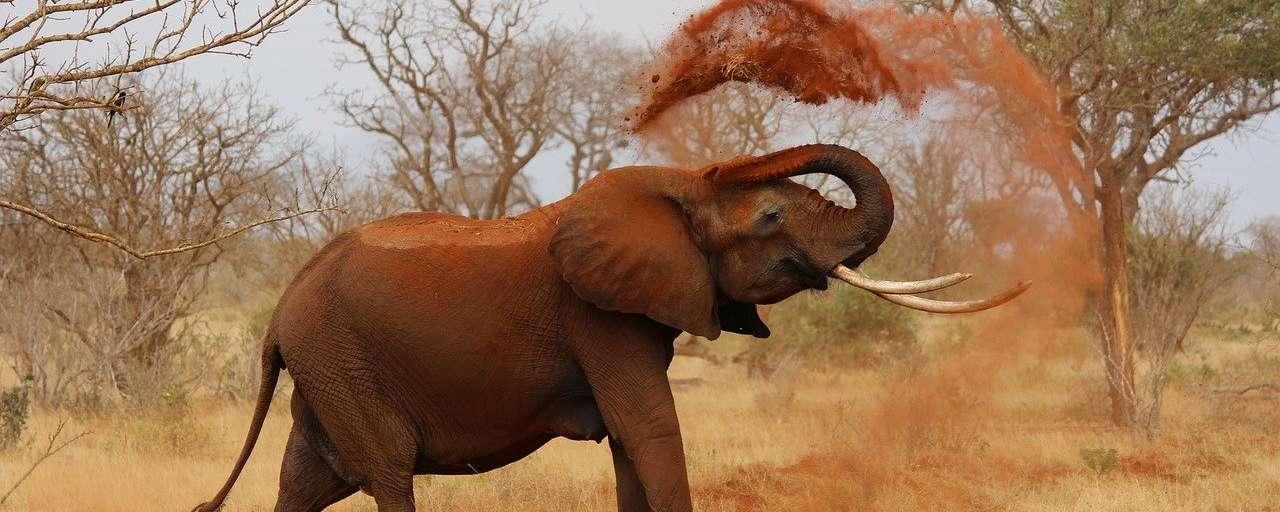 Kenia olifant Tsavo