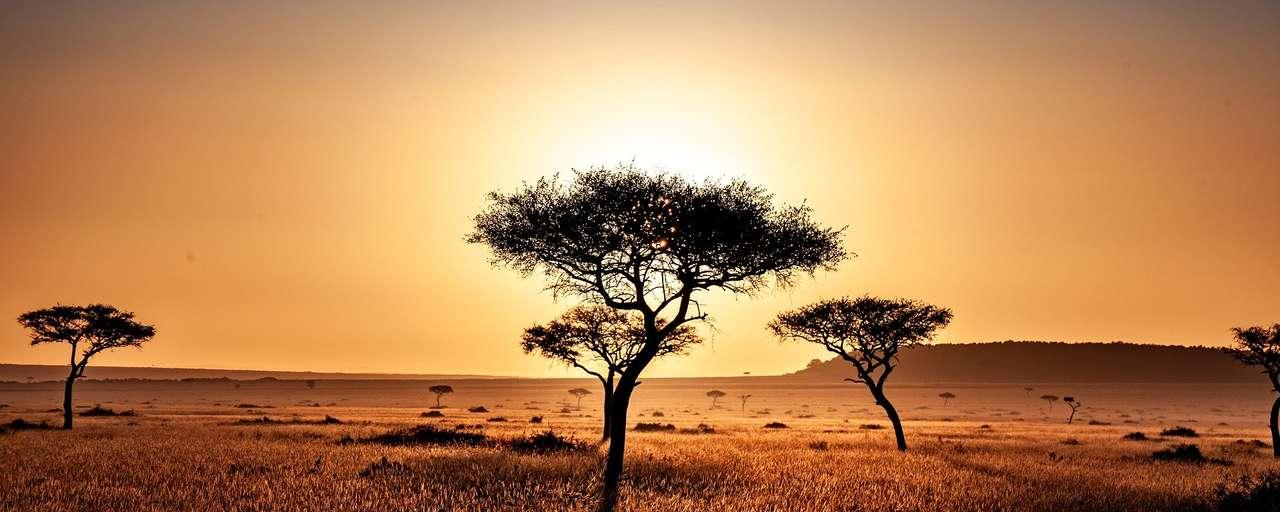 Kenia savanne