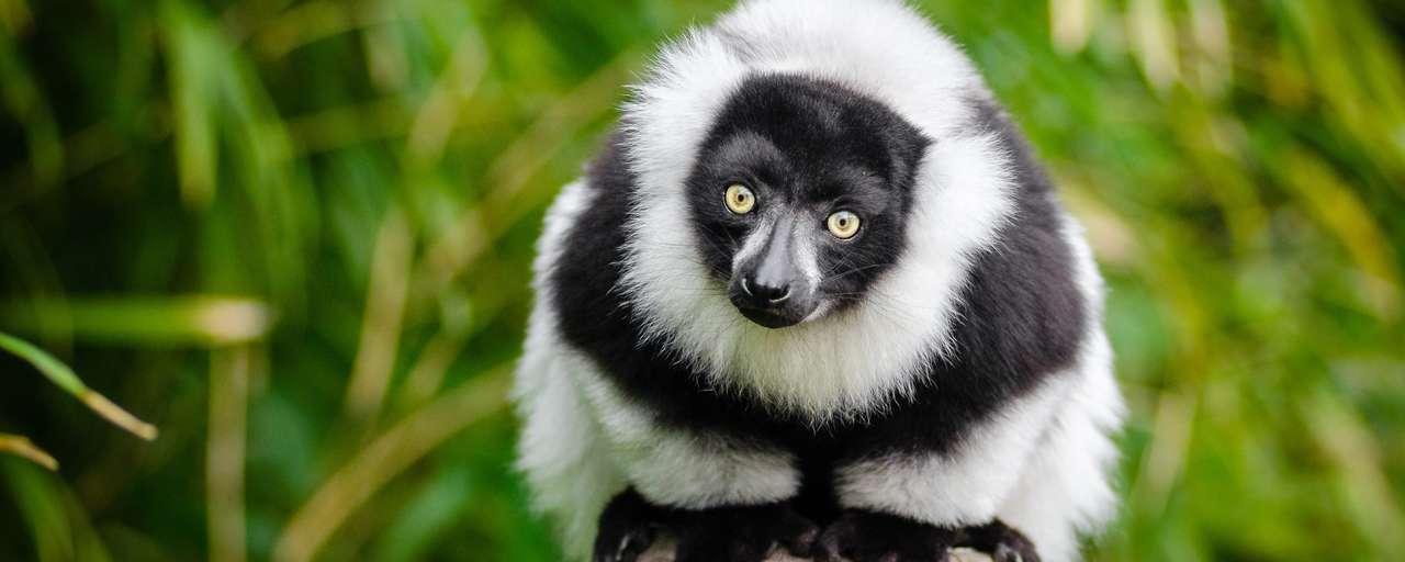 Rondreizen Madagaskar