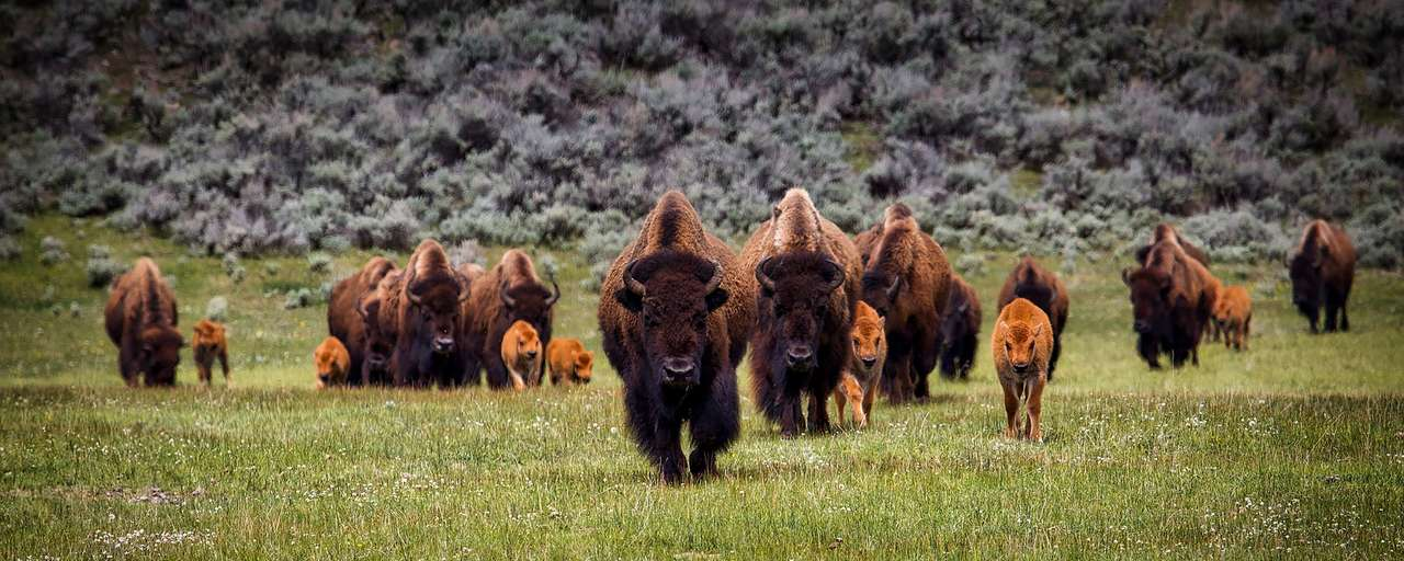 header Yellowstone